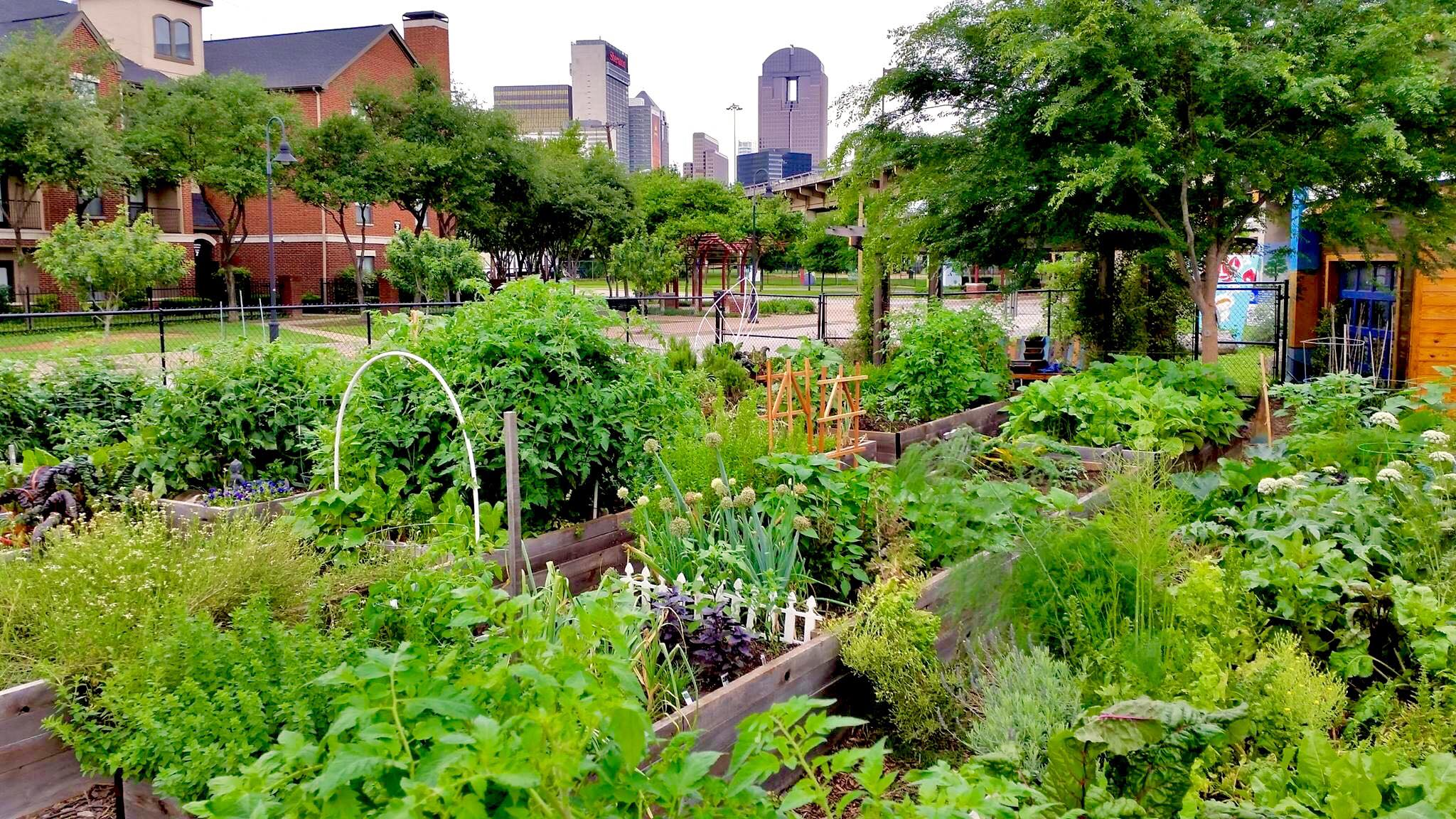 This is an outdoor urban garden open for people to buy a plot for their own personal garden of fruits, vegetables, and flowers.